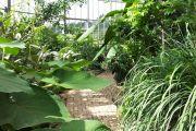 Tropenhaus Kleintettau: Der Garten Eden liegt am Rennsteig